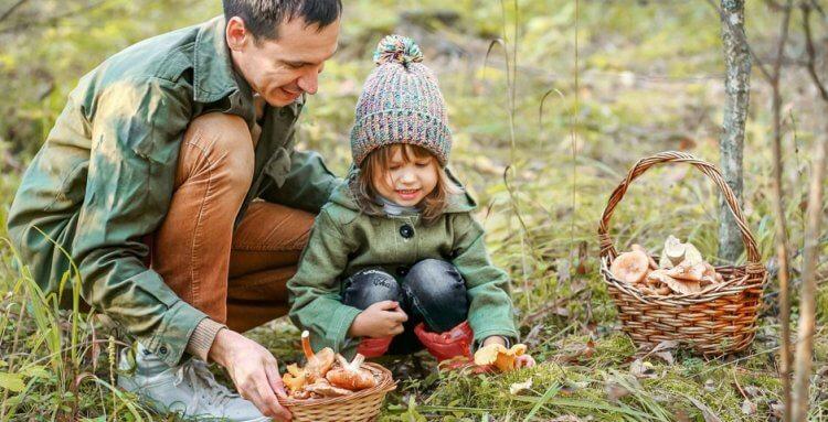 cueillette-champignons