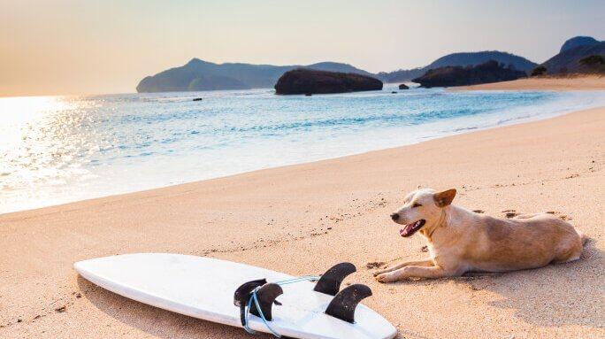 playas-perros-Espana