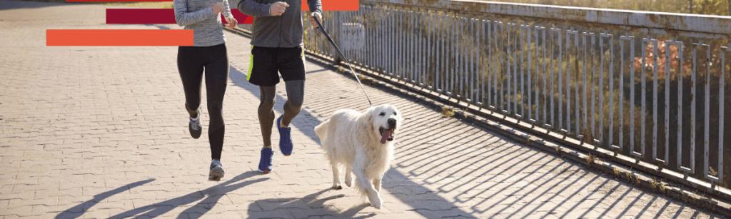Nuestros mejores consejos para empezar a correr con tu perro