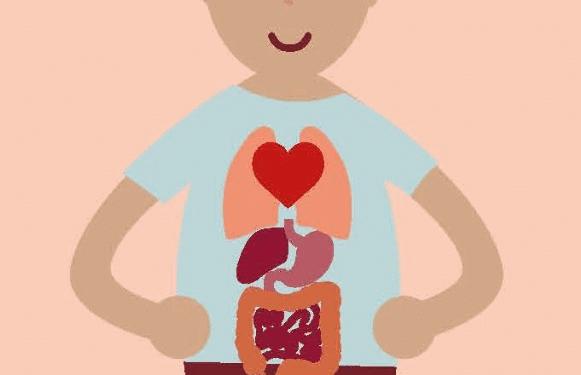 La salud digestiva puede ser la clave para un envejecimiento saludable